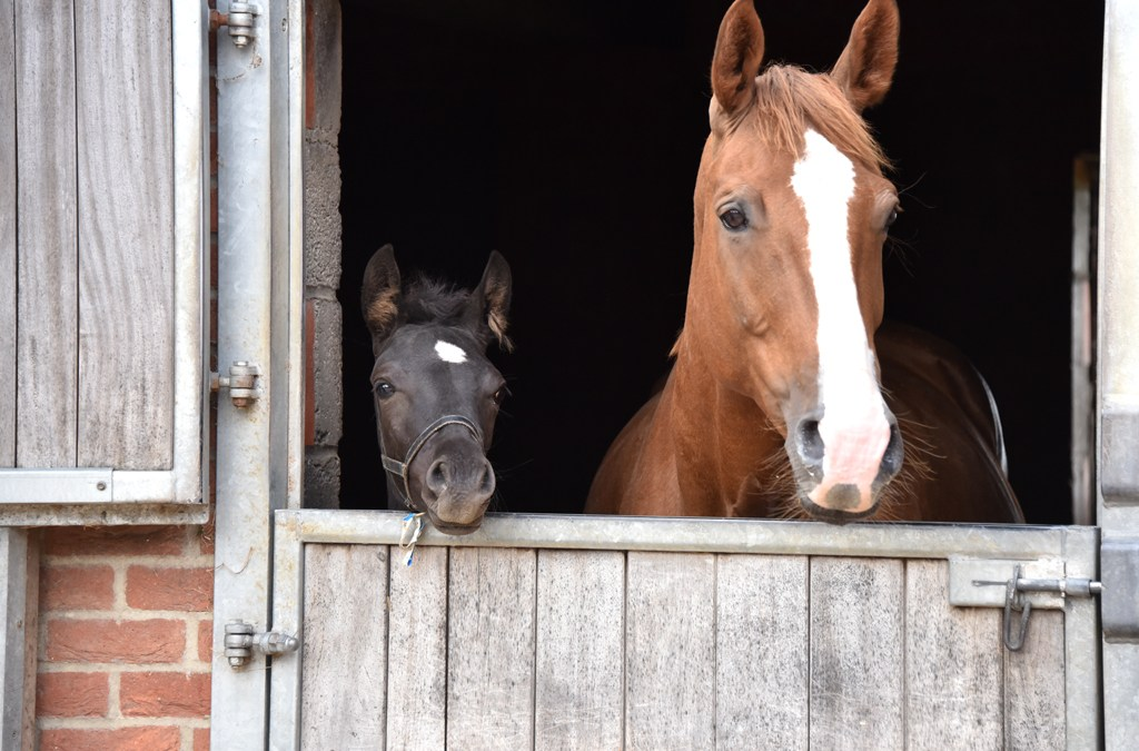 Thinking of putting your mare in foal this year?