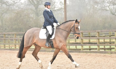 Mark Butler Dressage introduces ambassador Bibi