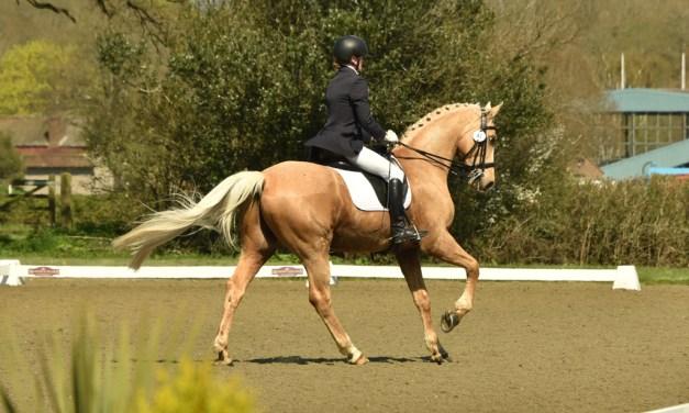 Hot horses and bright sunshine make a heady mix