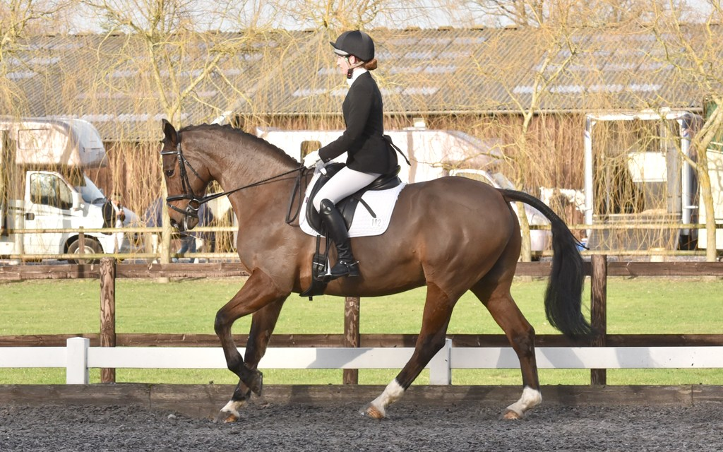 Dressage results: Oldencraig, Surrey, 18 January