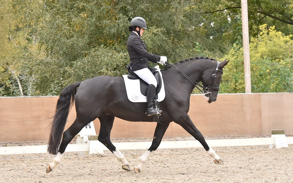 Dressage results: Petley Wood, East Sussex, 18 October 2020