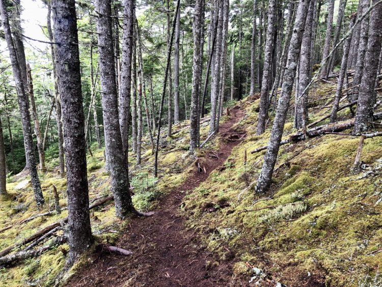 Forest hike in NB