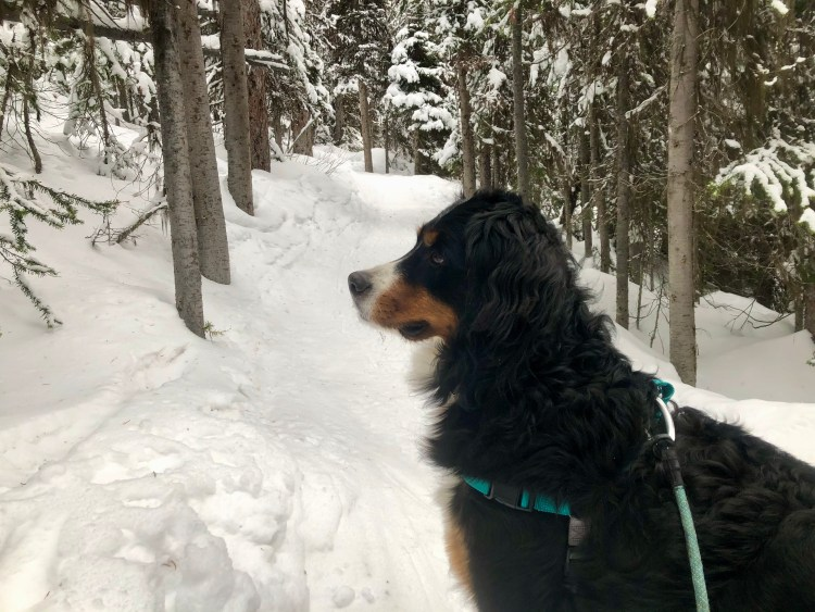 Leash and other winter hiking gear is important for your dog