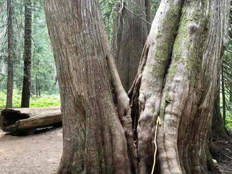 Ancient Cedars Trial hike in BC