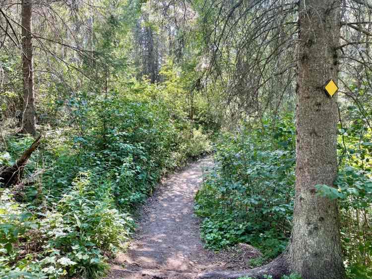 Elk Island hike forest marker