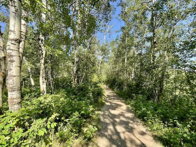 Elk Island hike through forest