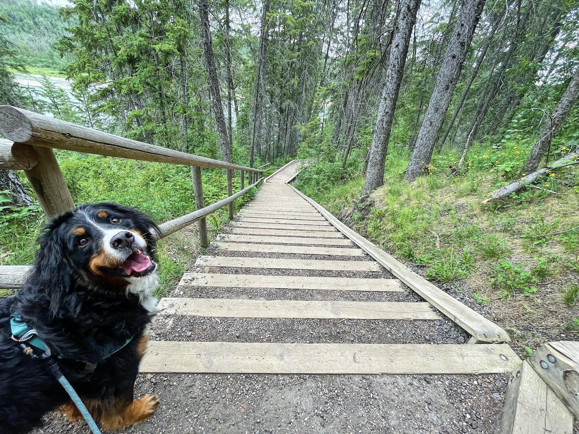 Devon River Valley Trail Near Edmonton, Alberta via @outandacross