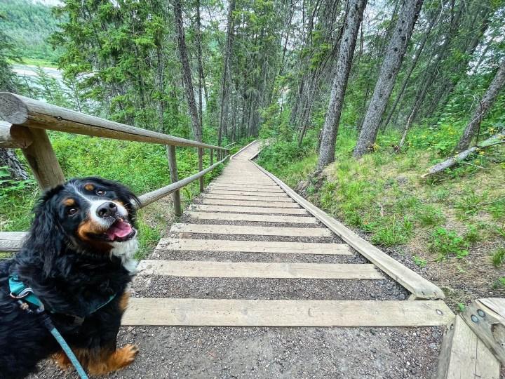 Devon River Valley Trail near Edmonton, Alberta