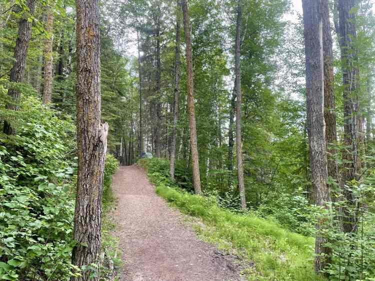 Devon River Valley Trail forest