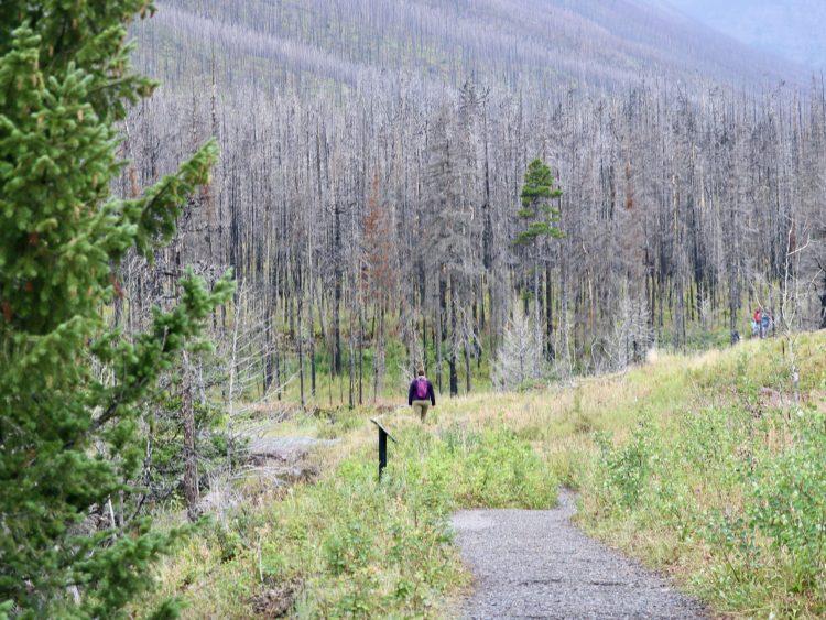 Blakiston Falls hiking trail