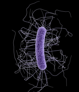 Clostridium difficile Image/CDC