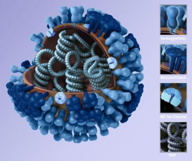 flu virus - Generic influenza virion