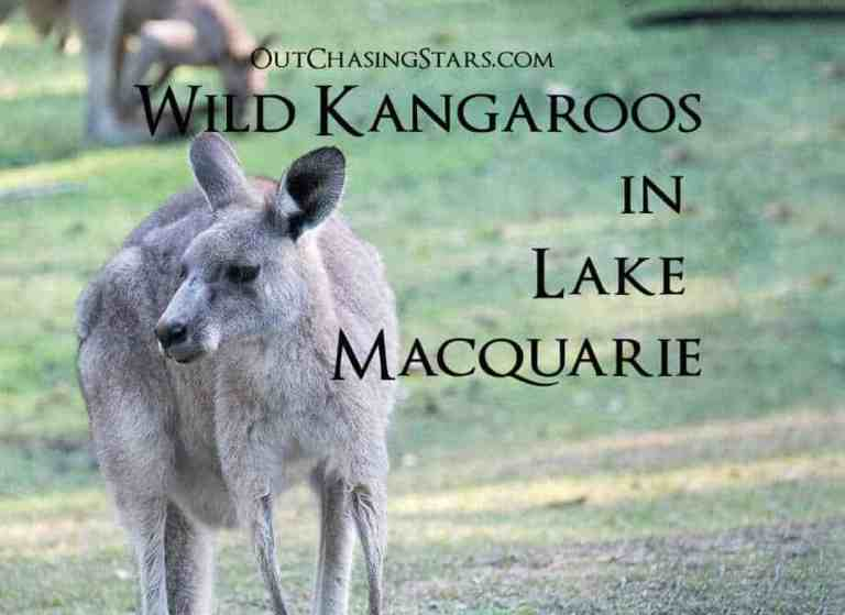 Wild Kangaroos while Cruising Lake Macquarie