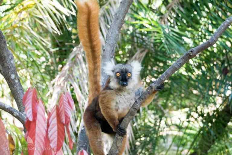 Hiking Nosy Komba, Madagascar
