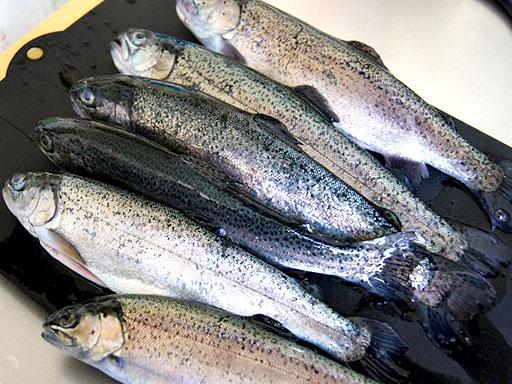 釣った魚を美味しく持ち帰りたい。簡単に出来る締め処理はこれだ
