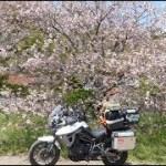 2018/04 TriumphTiger800XRxで行く!御衣黄桜キャンプツーリング