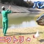 オオトカゲの餌を取るために鶏とバス釣り!