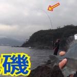 地磯でメジナ釣り【フカセ釣り】