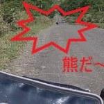 北海道ソロキャンプツーリングに行ったら熊に遭遇した。G310GS BMW