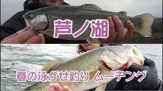 芦ノ湖 春の泳がせ釣り ムーチング