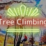 Tree climbing travel vlog|ツリークライミングからのアウトドアコーヒー|さとし Satoshi