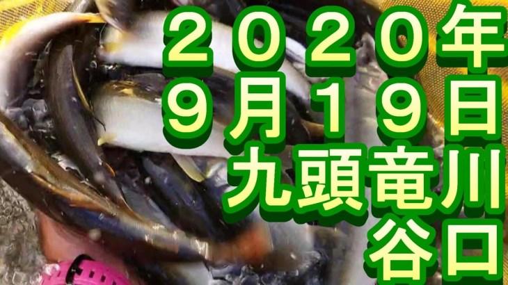 鮎釣り 九頭竜川 2020 小澤剛 友釣り無双