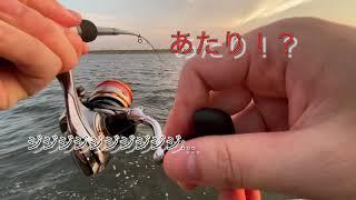 大阪湾 with Beers 〜大阪湾へ釣りに行きました。釣って、食べて、飲んで〜