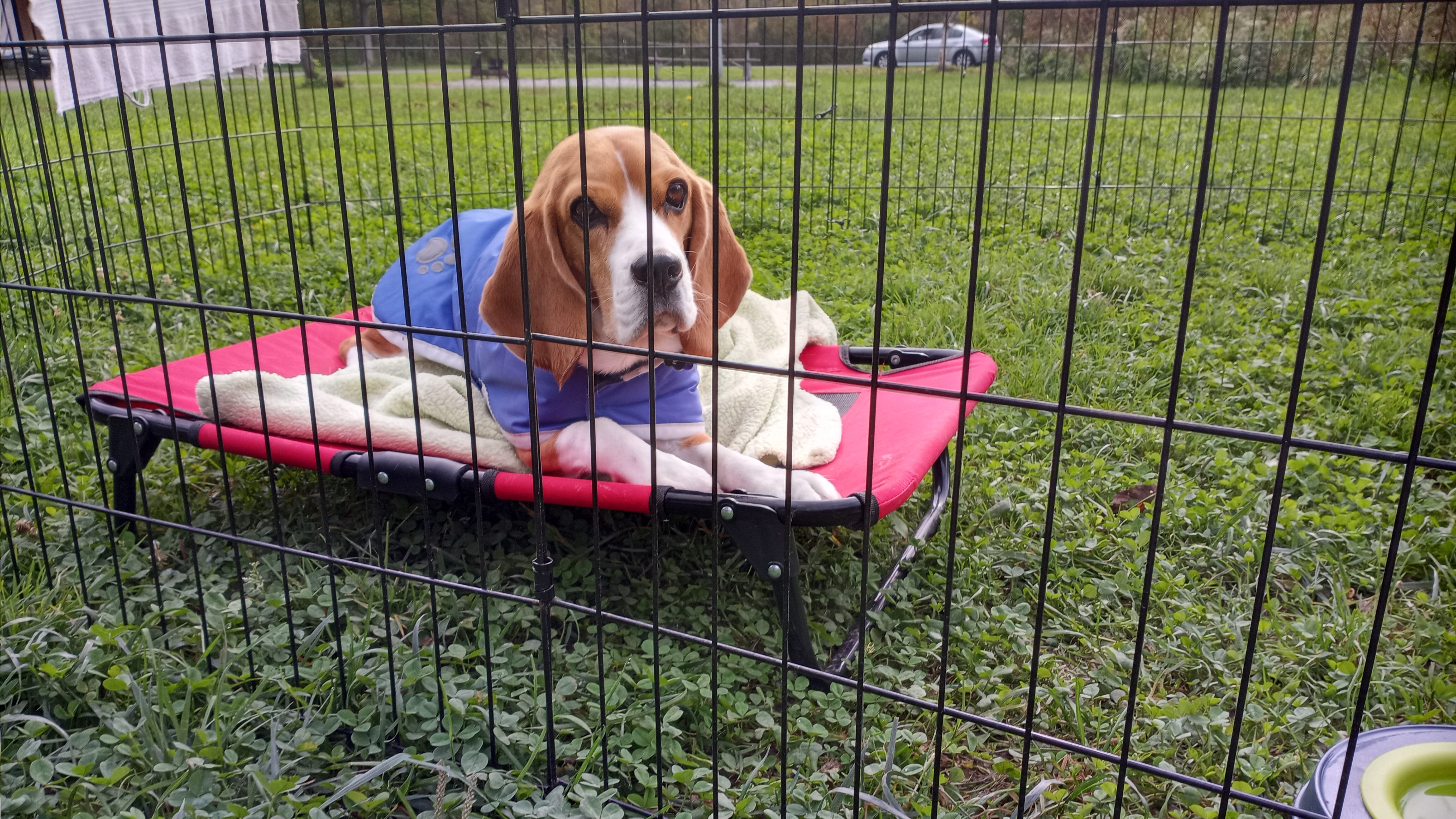 Dog laying on a raised bed