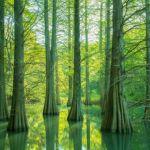 篠栗九大の森水辺の森