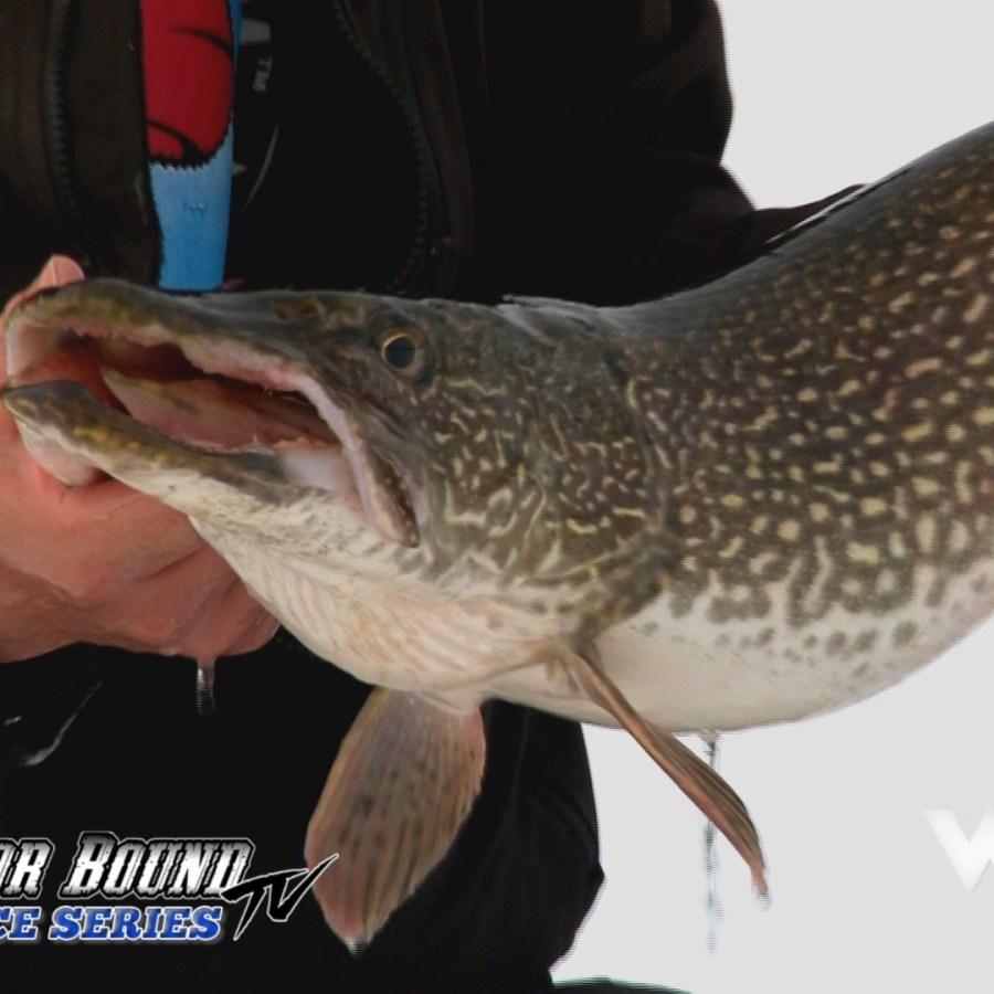Monster Manitoba Pike Outdoor Bound TV