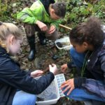 Students looking for macroinvertebrates