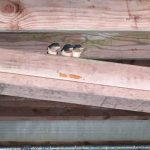 Three swallow chicks sitting on a rafter beam