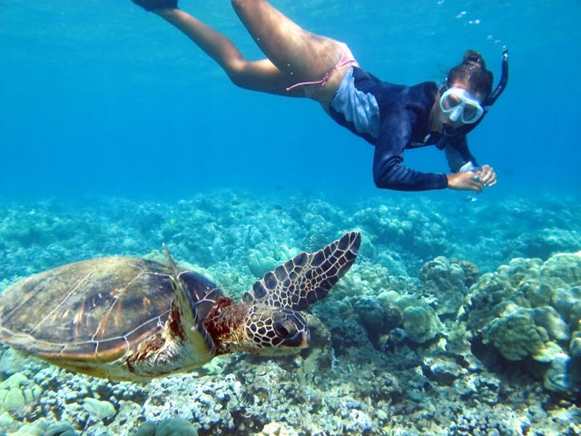 swimming with the turtle