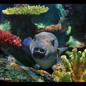 coral inhabitants