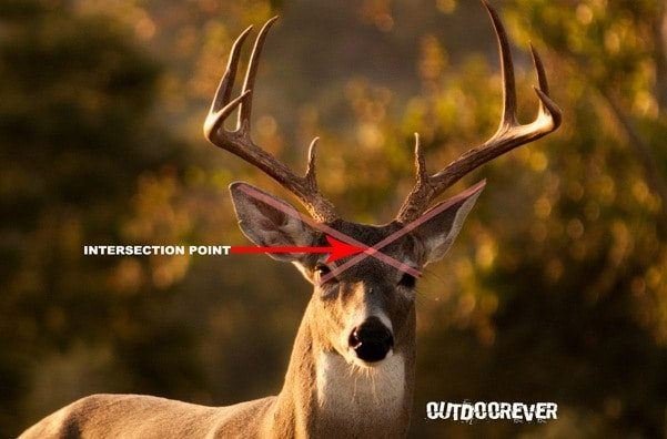 best places to shoot a deer 3?zoom=2.625&resize=356%2C234&ssl=1 5 best places to shoot a deer for single shot kill outdoorever
