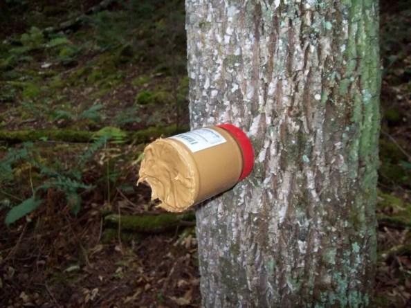 best deer bait - Peanut Butter
