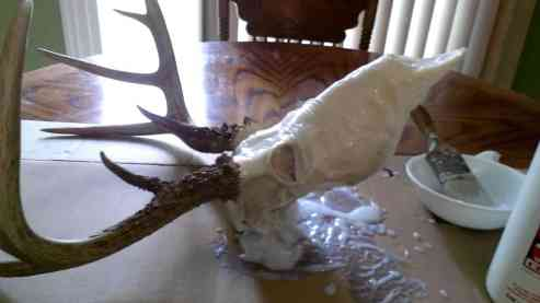 How To Clean A Deer Skull