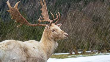 deer hunting in the rain