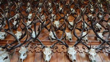 Best Hunting Lodges in Texas