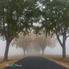 D60 Foggy Morning 005