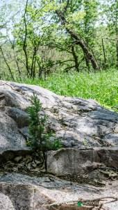 4 Blue Mound State Park 009