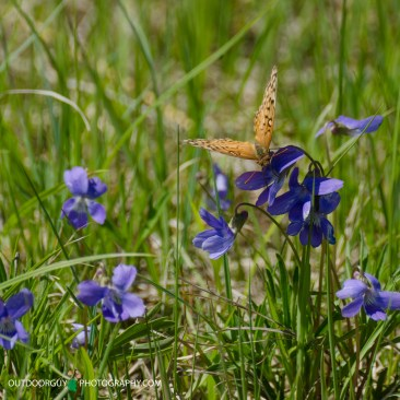 4 Blue Mound State Park 017