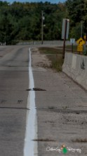road kill stripped