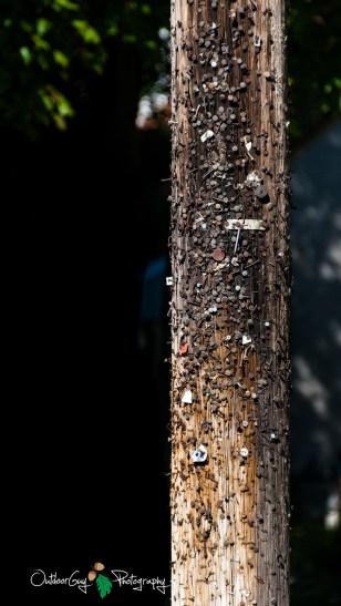 well-used telephone pole 1
