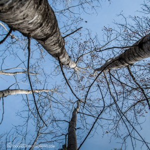 OutdoorGuyPhotography-6905