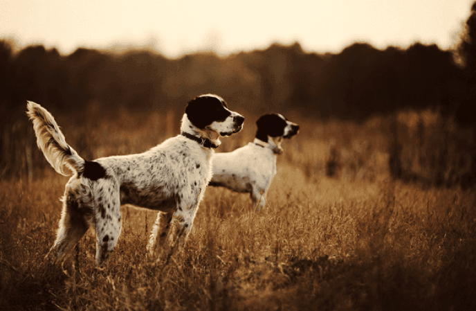 planning-to-hunt-with-your-dog