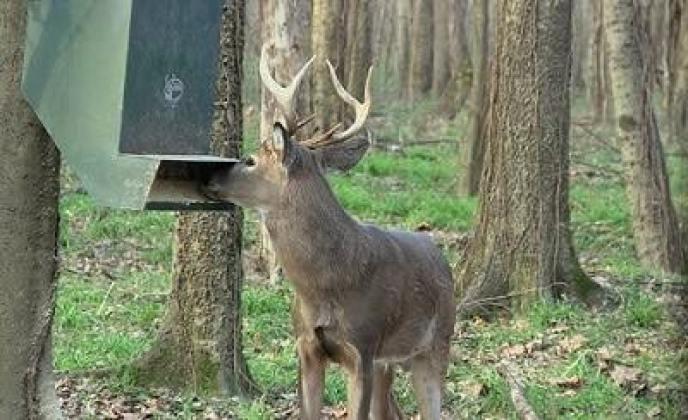 best-deer-feeders