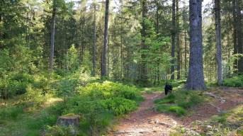 Camping Langenwald Freudenstadt