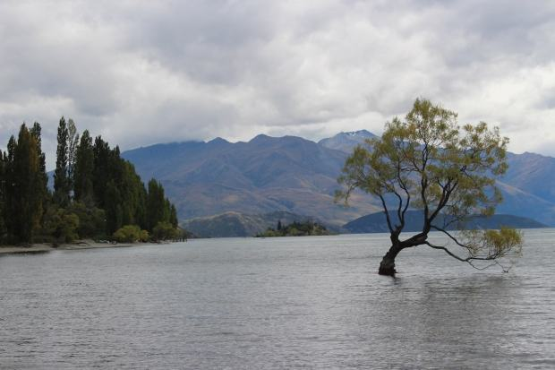 Fotospots Neuseeland Tree of Wanaka