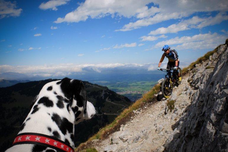 Der Dalmatiner schaut Ines Thoma beim Fahren zu (Pic: Max Schumann)